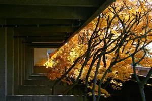 Autumnal. by etheraiel