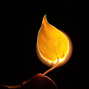 The Leaf on Fire.