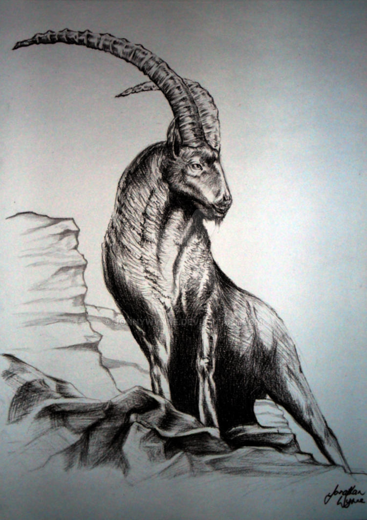 alpine ibex by jonnywynne on deviantart