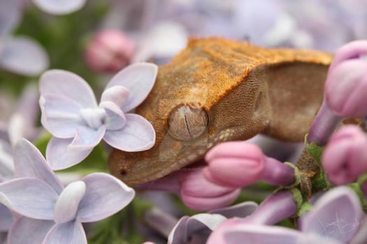 Licks and Lilacs: Biscotti