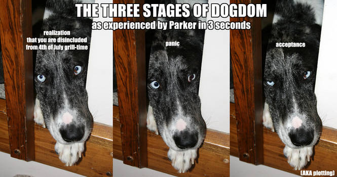 Three Stages of Dogdom by CatharsisJB