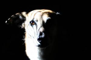 Shadow Kage