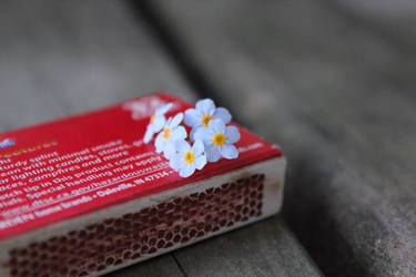 Forget-me-not flowers on a matchbox