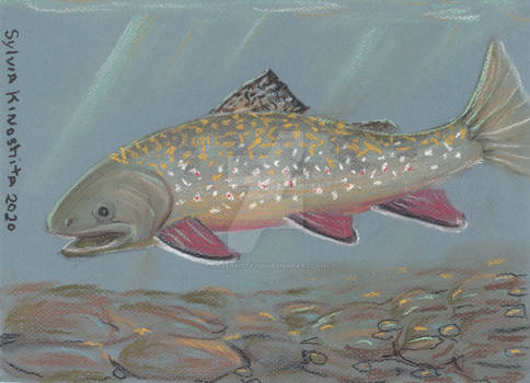 Brook Trout in Chalk Pastel