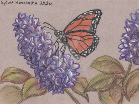 Monarch Butterfly in Chalk Pastel