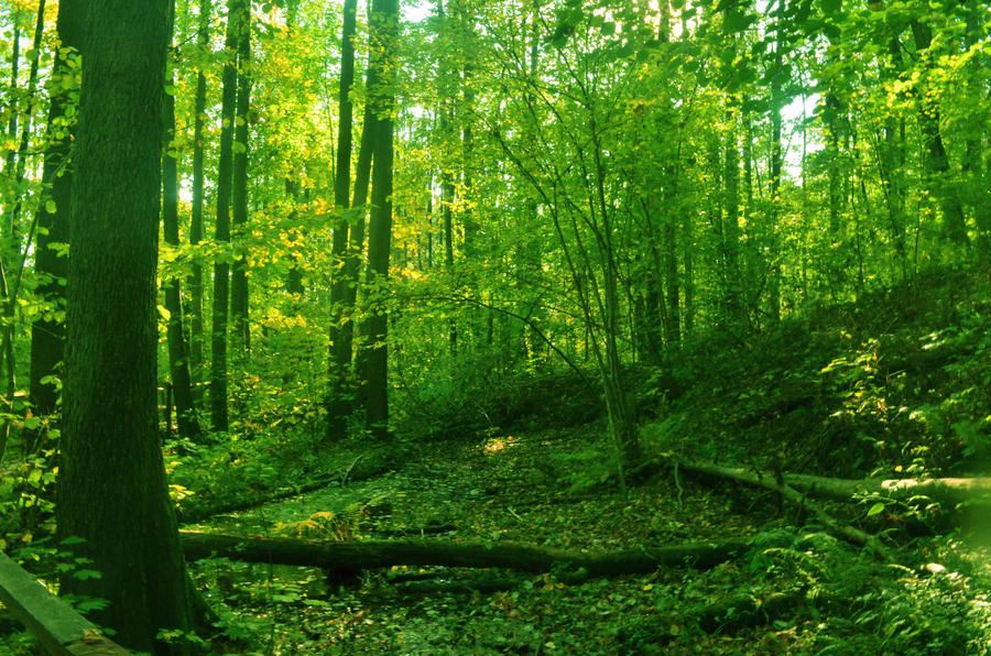 Virgin Forest by gorniczeq on DeviantArt