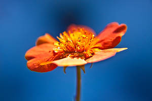 Macro Garden Flowers XIX