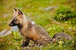 I see something - Baby Fox