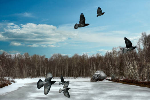 Psycho Pigeons