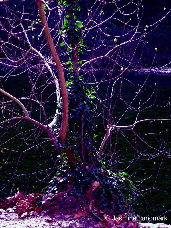 Fantasy tree by ChangXian