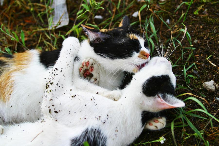 джозеф.  15865. Мои кошки берут пример с нас.