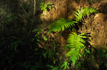 Fern in the setting light by Duskmourne