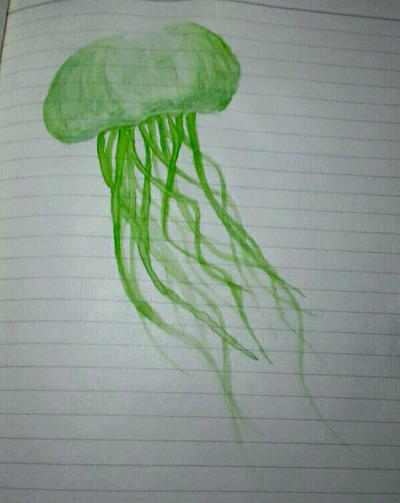 green jelly fish sketch by eriekate