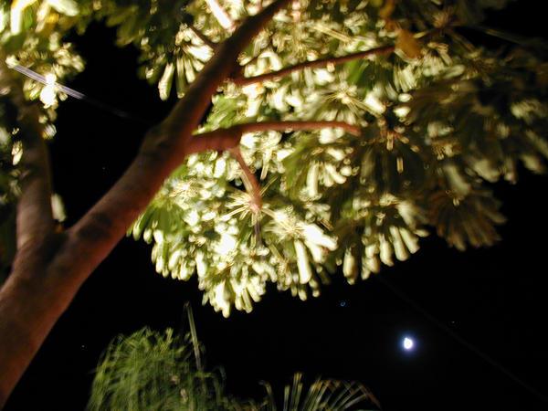 Tree's Full Of Starlight