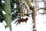 Run Kitty