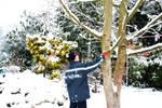 Shake Down The Snow