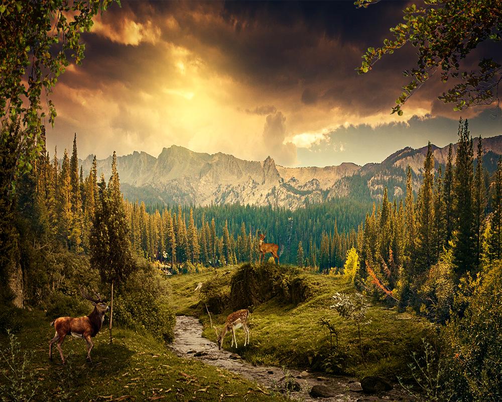 beautiful land by physajad