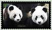 [Stamp2] Pandas by SweetStar990
