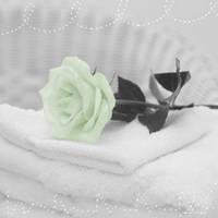 colourized rose by amaya-chibi