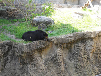 Zoo: Lonely Bear by ctk86