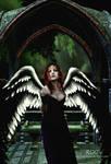 Night Angel Calls