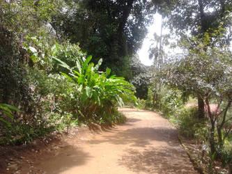 Green Track by RogerioGuimaraes