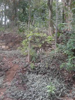 Green Track II