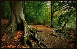 Root by EvranOzturk