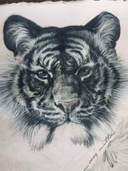Tigerboy by sooj