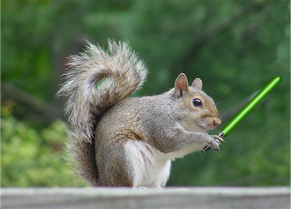Resultado de imagen para jedi squirrel