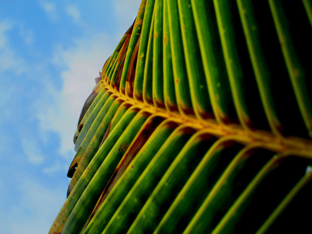 palm leaf by DulaniY