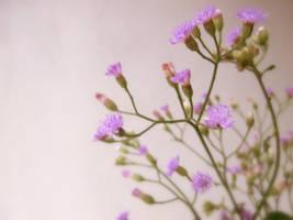 Wildflowers by DulaniY