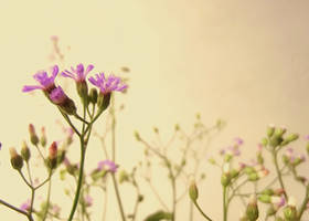 Wildflowers 3 by DulaniY