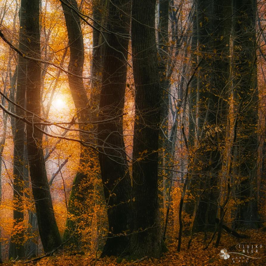 unchanted trees by ildiko-neer