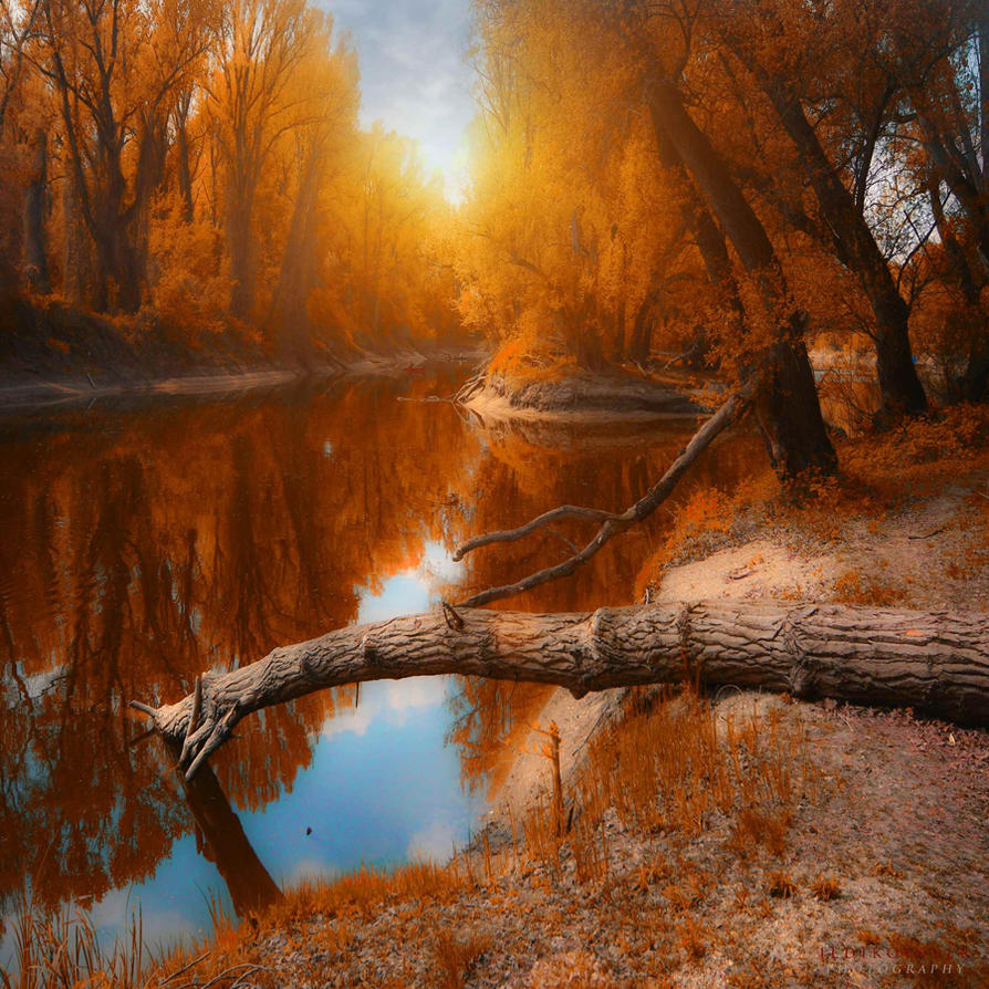 autumn in the air by ildiko-neer
