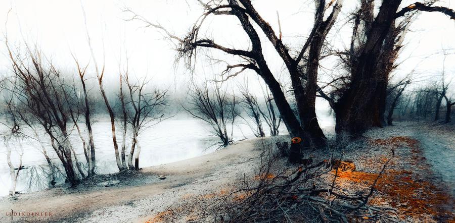 soul of trees by ildiko-neer