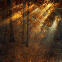 shining forest by ildiko-neer