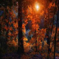 through the leaves by ildiko-neer