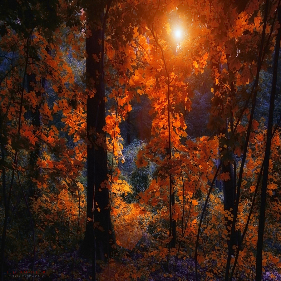 through the leaves by ildiko-neer