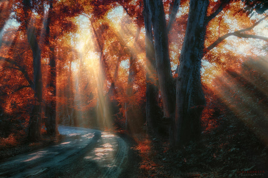 let the sunshine in by ildiko-neer
