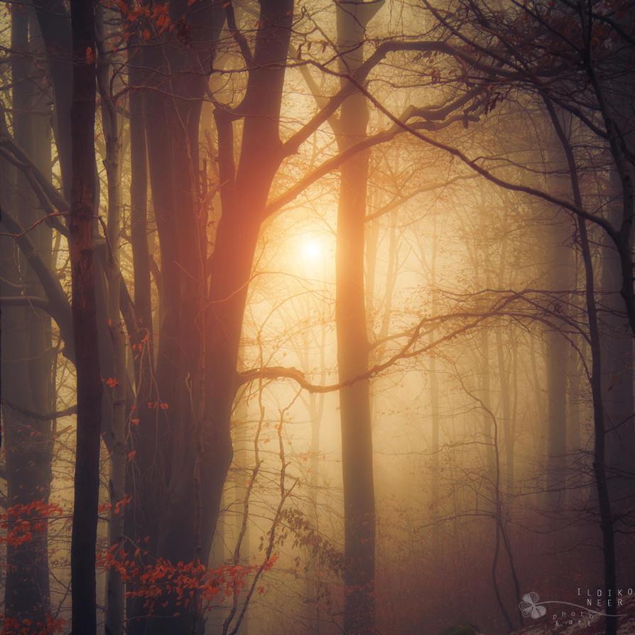 silence by ildiko-neer