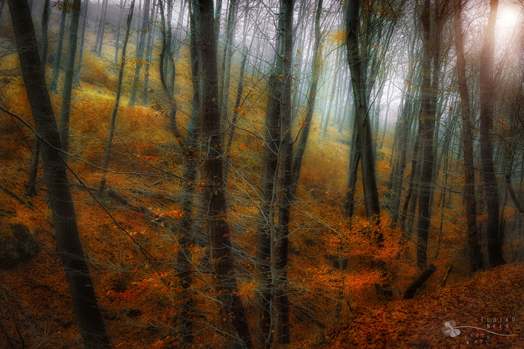forest carpet by ildiko-neer
