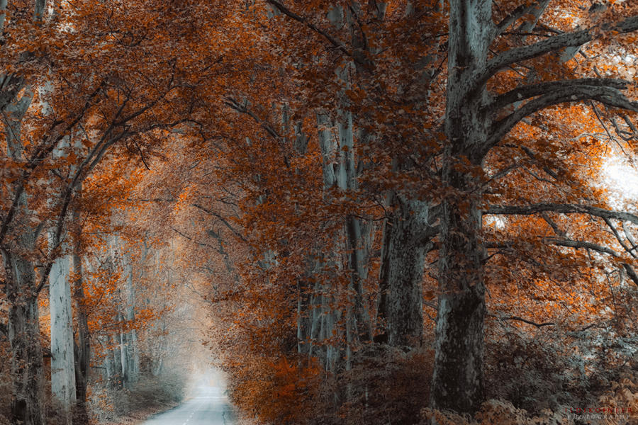 wild autumn road by ildiko-neer