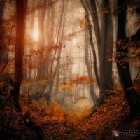 enchanted path by ildiko-neer