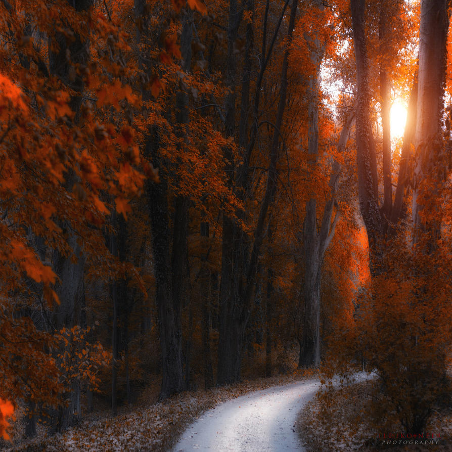 path through the tress by ildiko-neer