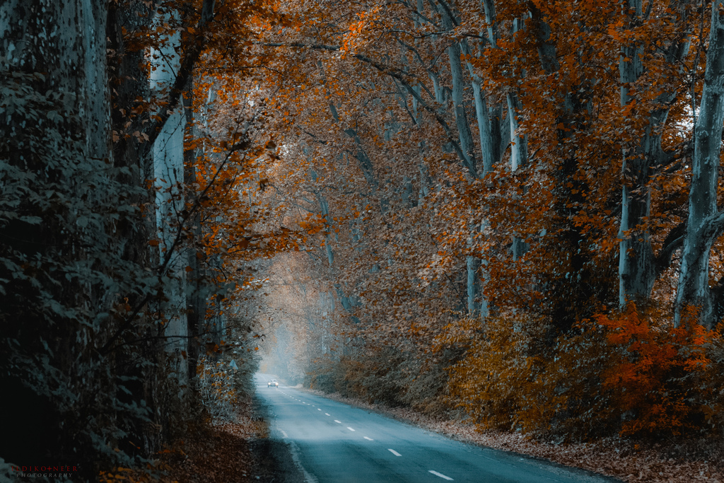 tunnel by ildiko-neer