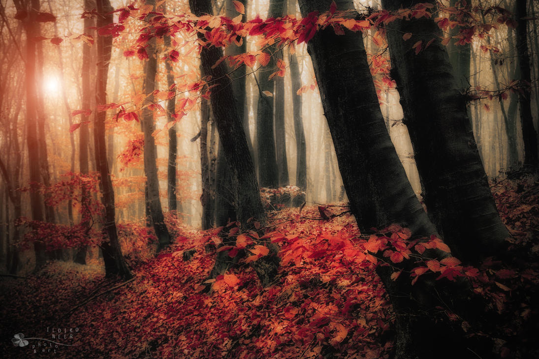 i'm home by ildiko-neer