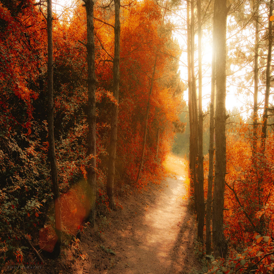 path to the shine by ildiko-neer
