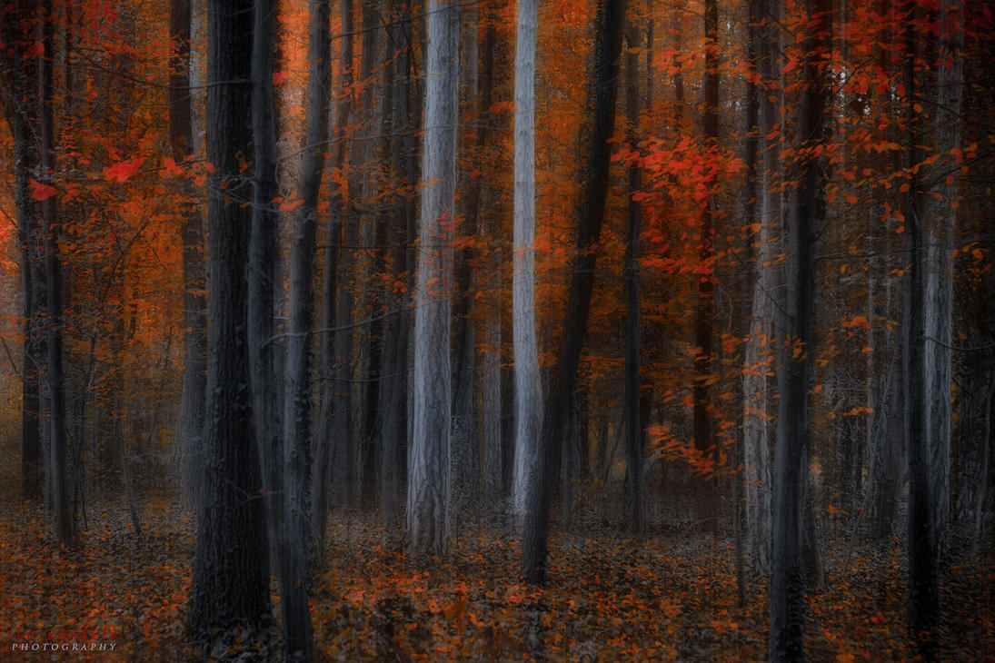 alternatives by ildiko-neer