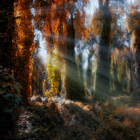 paradise exist by ildiko-neer